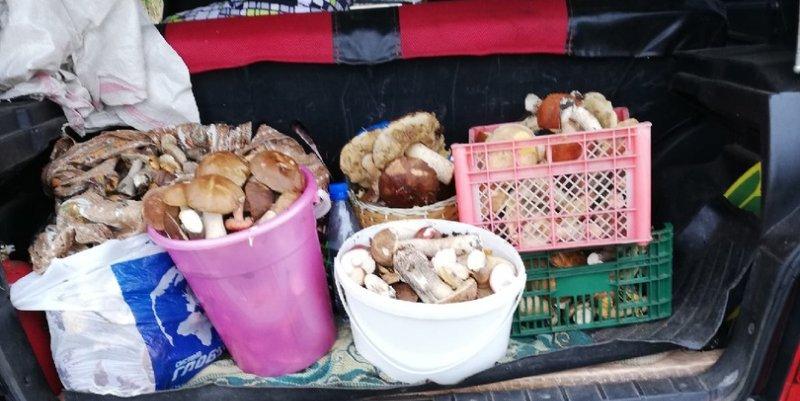 «Четыре ведра за четыре часа»: куда идти за грибами в Кировской области