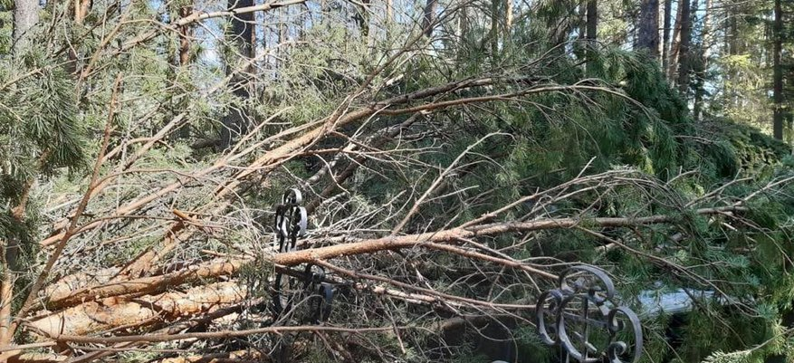 Выбитые стёкла и поваленные деревья: по северным районам Кировской области прошелся ураган