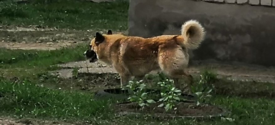 В Демьяново бездомная собака напала на ребенка рядом со школой